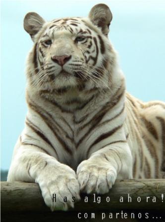 el tigre de las vegas de citas en línea gratis