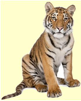 caracteristicas tigres