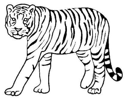 dibujo de tigre dos