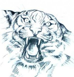 dibujo cara tigre